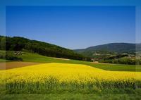 ¿Por qué nos gustan más determinados paisajes que otros?