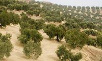 El problema del campo español: quien tiene poco no cubre costes, y el que tiene mucho infrautiliza