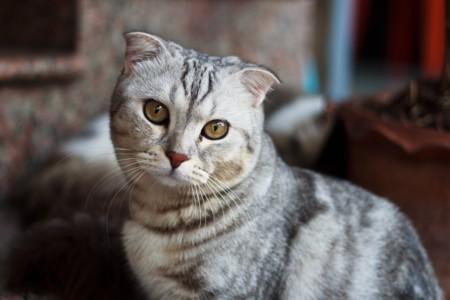 Un Nuevo Gato
