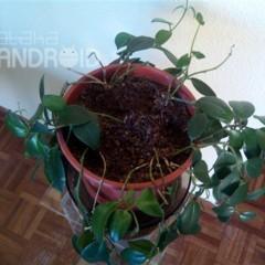 Foto 7 de 10 de la galería fotos-tomadas-por-bq-aquaris-5 en Xataka Android