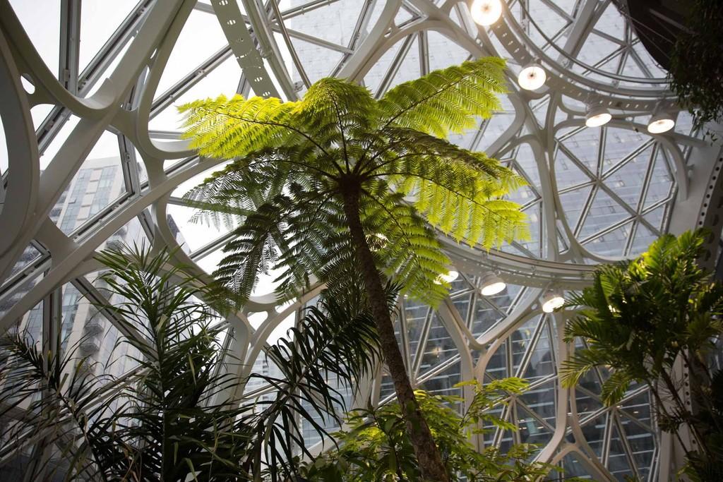 The Spheres Amazon 4