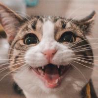 Animales y coronavirus: todo lo que sabemos hasta ahora sobre si las mascotas pueden contagiarse (y contagiar al ser humano)