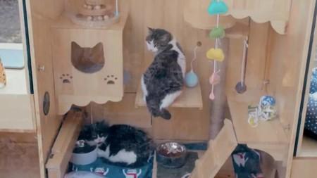 Refugio para gatos de Baidu