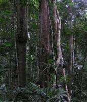 El biodiésel amenaza el bosque tropical
