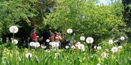 Real Jardin Botanico 1