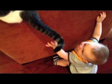 Humor: ¿No sabes cómo entretener a tu bebé? Pon un gato en tu vida