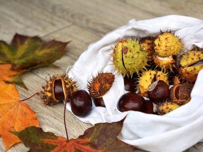 Viaja por España este otoño recorriendo las mejores ferias gastronómicas