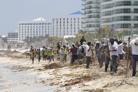 Una app será la nueva herramienta para conocer qué playas del Caribe mexicano tienen sargazo