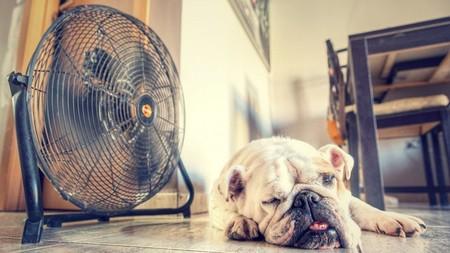 Los mejores ventiladores según los comentaristas de Amazon