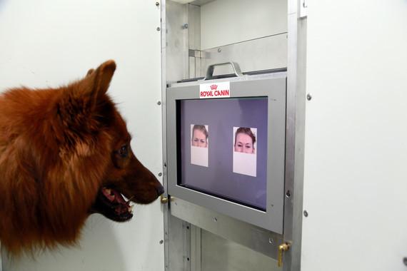Se demuestra que los perros distinguen si estás contento o enfadado mirándote a la cara