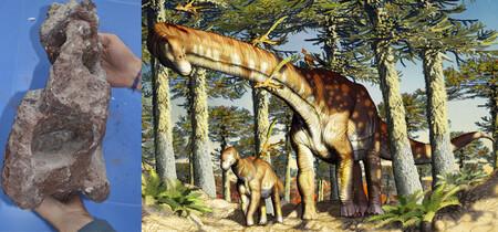 Se descubre un titanosaurio que tiene 20 millones de años más que el más antiguo en Patagonia