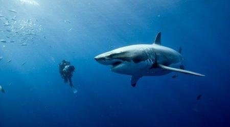 oceans_gallery_0011.jpg