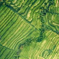 Foto 9 de 14 de la galería fondos-de-naturaleza-1 en Xataka Android