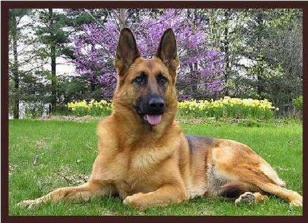 Viva la serendipia (X): el perro alérgico y la X marca el lugar