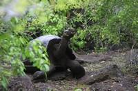 [Vídeo] Al rescate de las tortugas gigantes de Galápagos