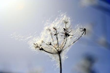 Mis trucos para sobrellevar la alergia esta primavera