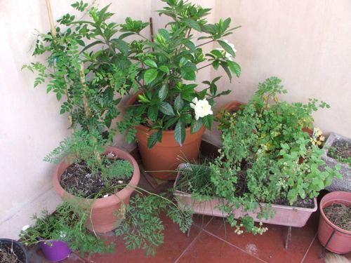 Foto de Enseñanos tu casa: La Casa de Leda (II) (9/12)