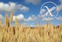 A partir del 2016 habrá más información al consumidor sobre la cantidad de gluten en los alimentos