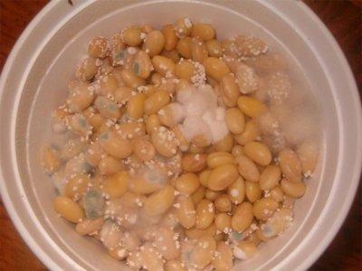 Sustitos naturales de la soja
