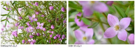 Ejemplo de la lente de aproximación N1-CL1
