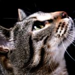 11 aplicaciones y canales de YouTube para conocer mejor a tu mascota
