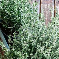 Consejos para cultivar plantas aromáticas en casa