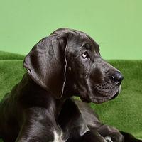 """25.000 hogares para mascotas: Gudog y HouseMyDog se fusionan para consolidar el """"Airbnb de los perros"""""""