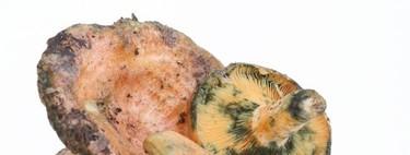 Níscalos, una buena fuente de potasio durante el otoño