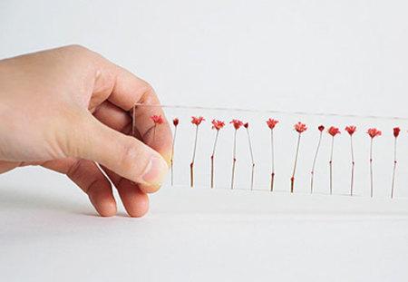 Regla de flores secas