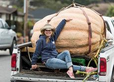 ¿Qué prepararías con una calabaza de 866 kilogramos?