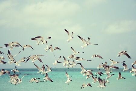 Un nuevo algoritmo sugiere que en el nuestro planeta hay unas seis aves por cada ser humano