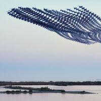 Ornitografías: cuando los vuelos de las aves se vuelven poéticos trazos abstractos
