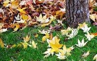 Cinco consejos para hacer fotos a las hojas en Otoño