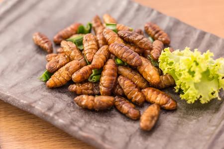 comer-insectos-plato