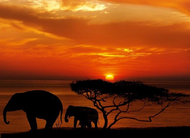 Todo lo que necesitas llevar para un safari por África