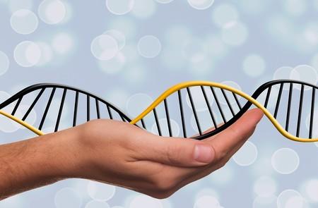 Dejando de ser Homo sapiens gracias a la ingeniería genética