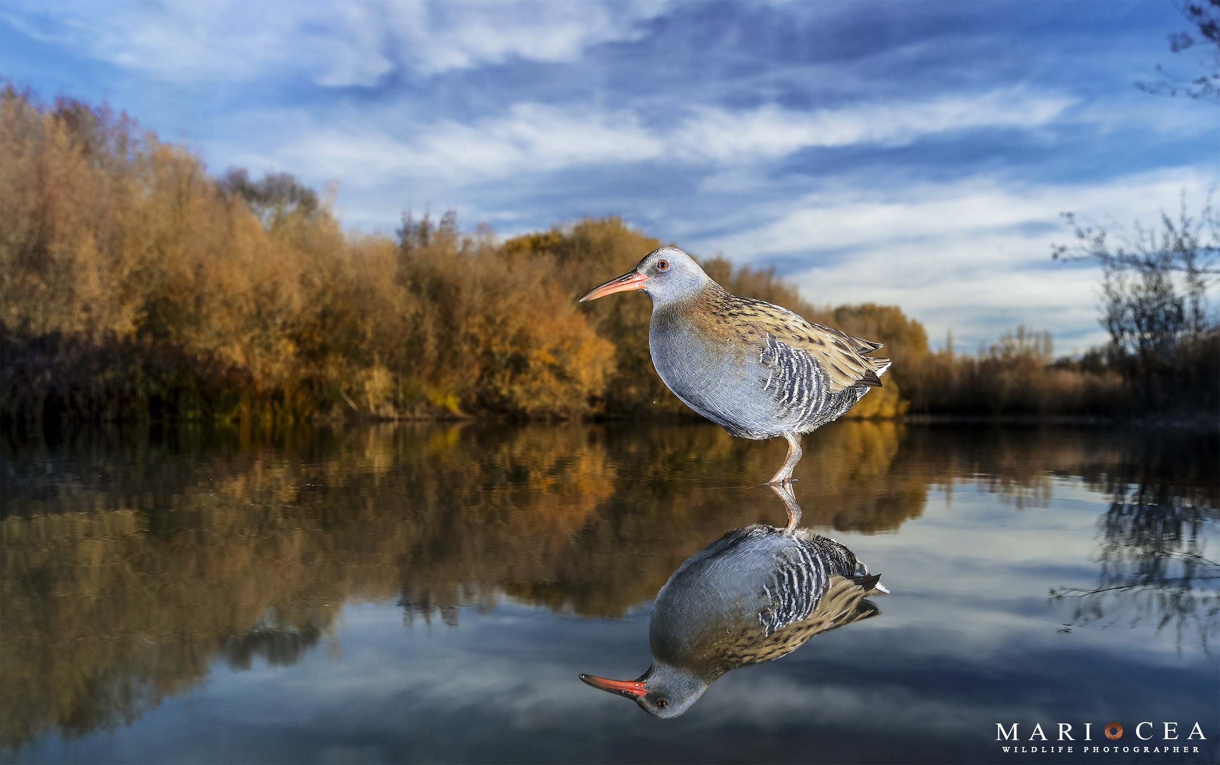 Foto de Fotografías de naturaleza tomadas por Mario Cea (12/12)