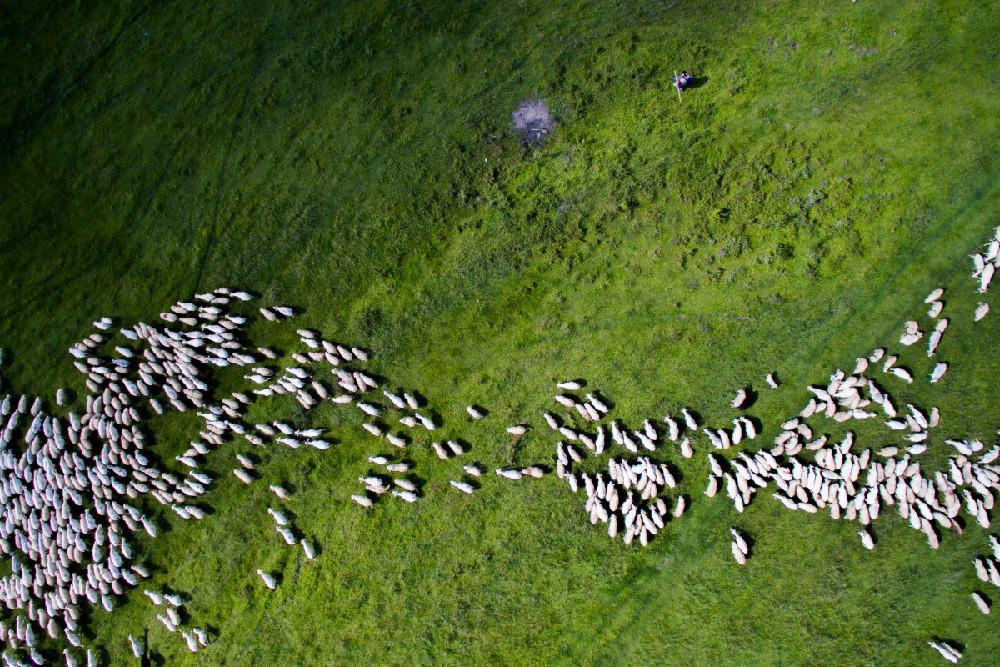 Swarm By Szabolcs Ignacz