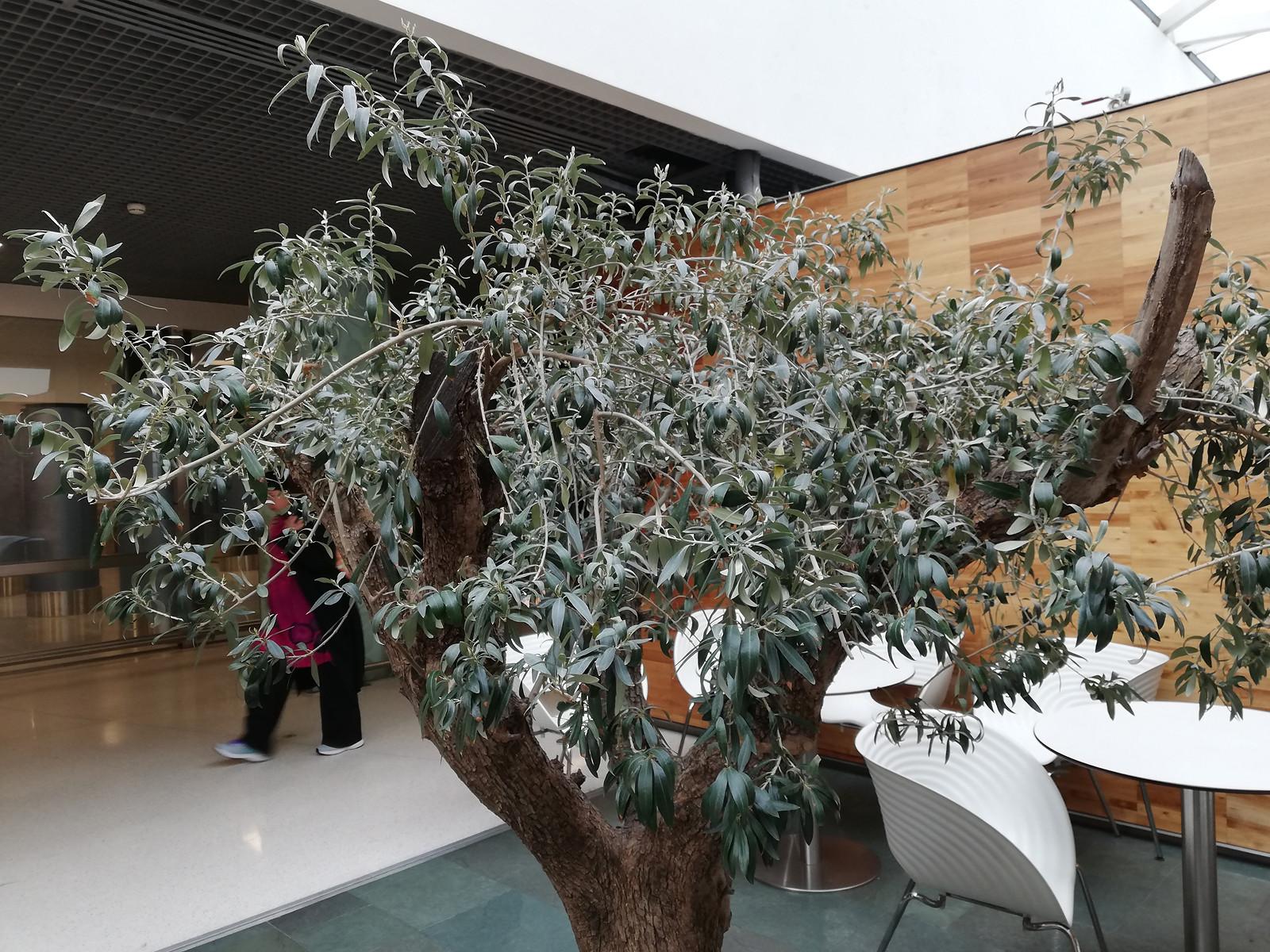 Foto de Huawei P20 Lite (12/24)