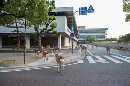 Planet Deer Yoko Ishii 3