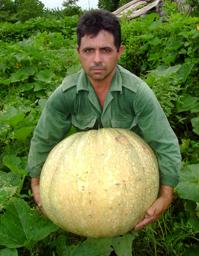 calabaza40kg.PNG
