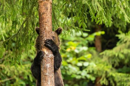 El fin del verano es mejor con una sonrisa: estas son las divertidas fotos finalistas de los Comedy Wildlife Photo Awards 2021