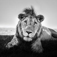 'Eight Feet', los retratos más atrevidos de animales salvajes en libertad por Graeme Purdy