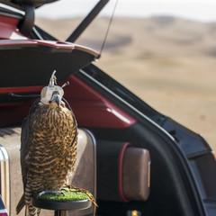 Foto 7 de 36 de la galería bentley-bentayga-falconry en Motorpasión