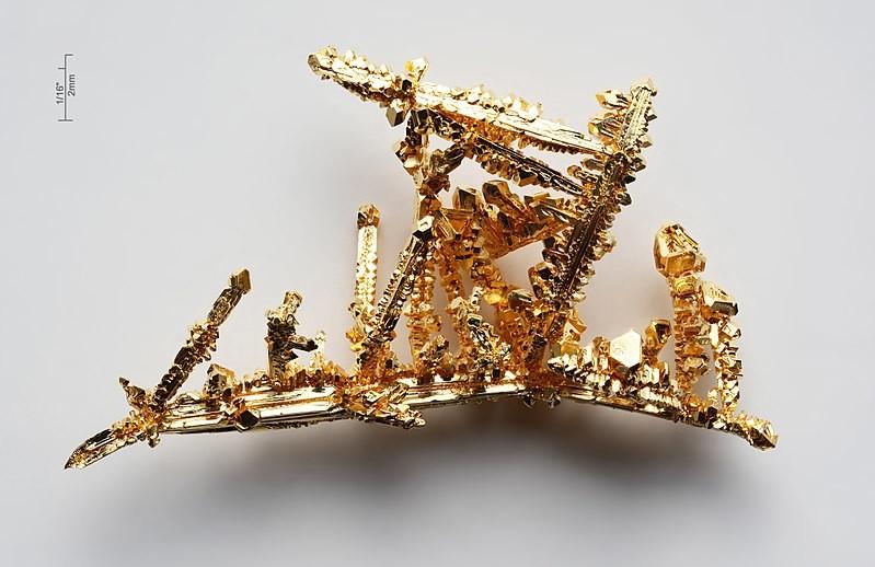 Cómo hacerse de oro buscando hongos, eucaliptos y termitas: una sorpresa micológica en el oeste de Australia