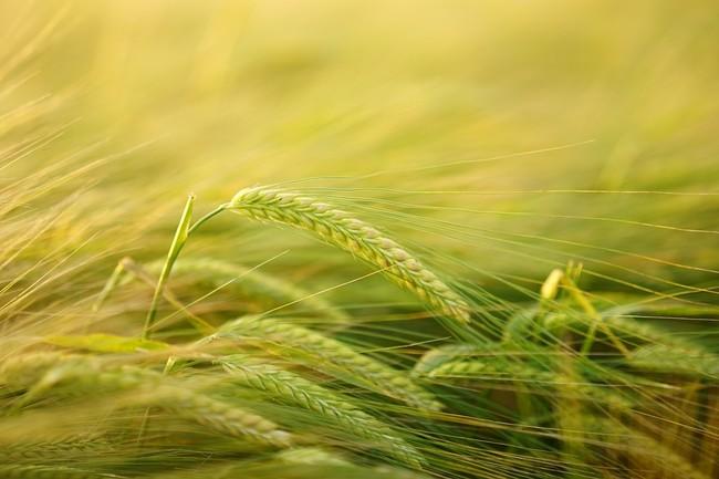 Las plantas del futuro podrían desarrollar su propio fertilizante captándolo del aire
