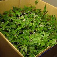 Dakota del Sur tendrá un resort turístico dedicado a la marihuana