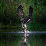 Estas son las sugerentes fotografías de naturaleza ganadoras del concurso 2020 National Parks of United Kingdom