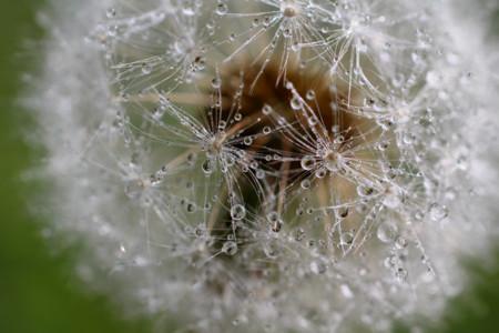 Ladydragonfly
