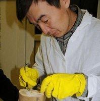 Japón y Rusia anuncian que pueden clonar un mamut
